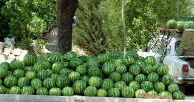 arbuzy v Krymu
