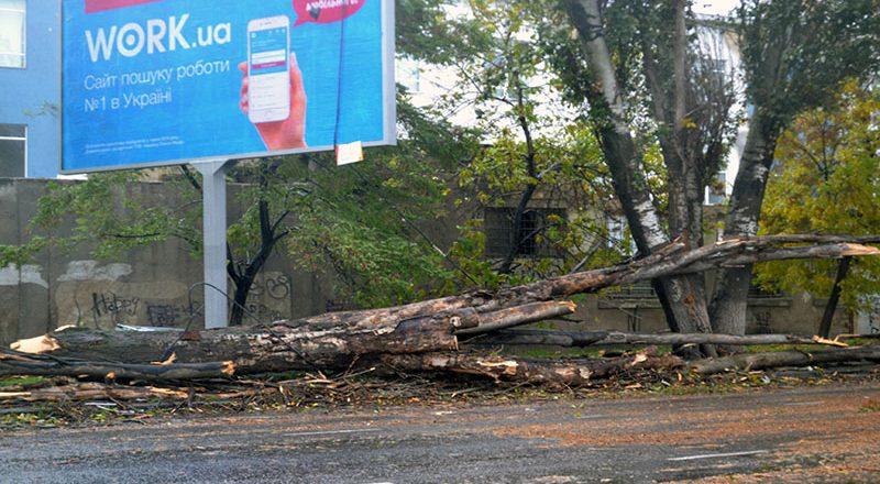 В Одессе на пересыпи дерево упало на проезжающий автомобиль