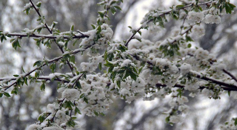 Апрельский снег в Одессе